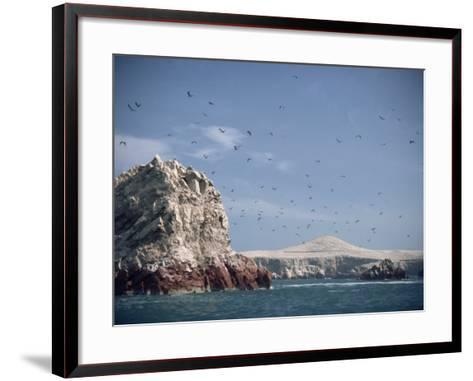 Flock of Birds Above the Coast Near Pisco, Peru, South America-Rob Cousins-Framed Art Print