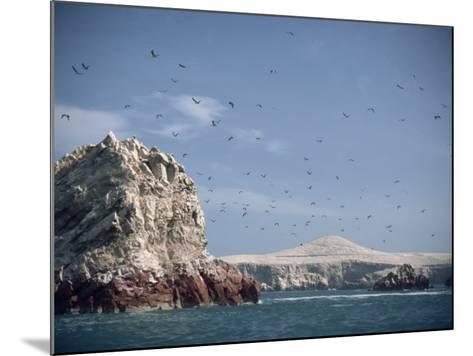 Flock of Birds Above the Coast Near Pisco, Peru, South America-Rob Cousins-Mounted Photographic Print