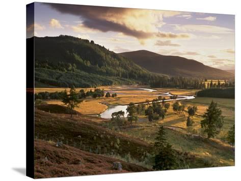 Upper Dee Valley Near Inverey, Deeside, Aberdeenshire, Scotland, United Kingdom, Europe-Patrick Dieudonne-Stretched Canvas Print