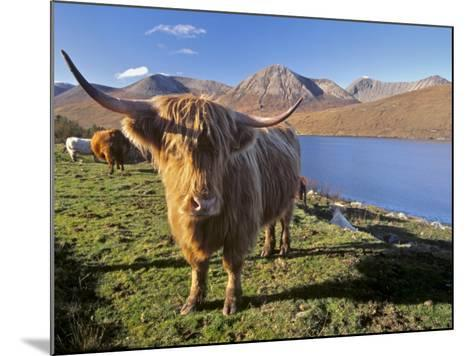 Highland Cattle, Loch Hainort and Red Cuillins, Isle of Skye, Inner Hebrides, Scotland-Patrick Dieudonne-Mounted Photographic Print