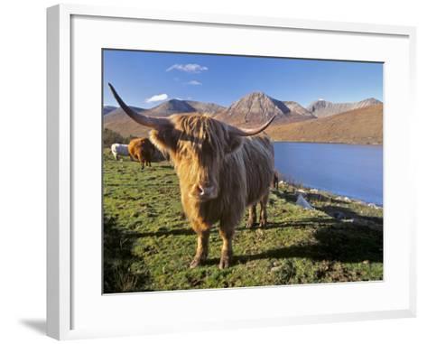 Highland Cattle, Loch Hainort and Red Cuillins, Isle of Skye, Inner Hebrides, Scotland-Patrick Dieudonne-Framed Art Print