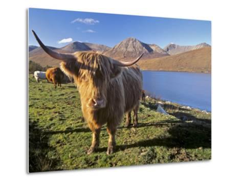 Highland Cattle, Loch Hainort and Red Cuillins, Isle of Skye, Inner Hebrides, Scotland-Patrick Dieudonne-Metal Print
