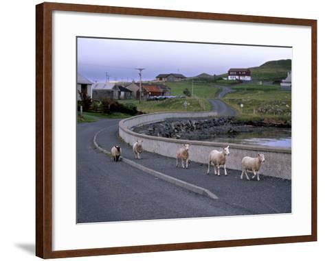 Sheep Rearing Is One of the Main Economic Activities in Shetland, Shetland Islands, Scotland, UK-Patrick Dieudonne-Framed Art Print
