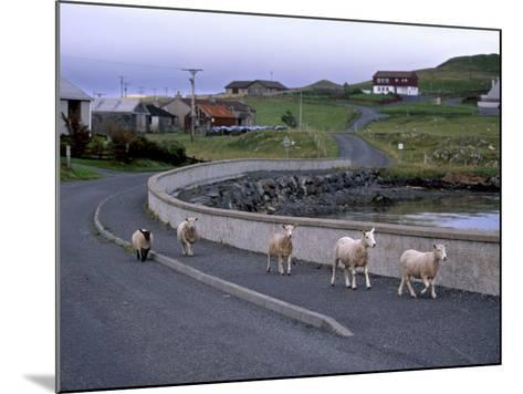 Sheep Rearing Is One of the Main Economic Activities in Shetland, Shetland Islands, Scotland, UK-Patrick Dieudonne-Mounted Photographic Print