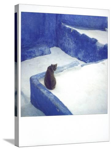 Polaroid of a Cat Sitting on Whitewashed Path, Chefchaouen, Morocco, North Africa, Africa-Lee Frost-Stretched Canvas Print