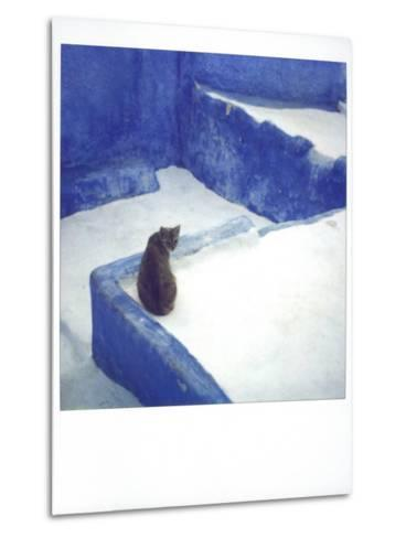 Polaroid of a Cat Sitting on Whitewashed Path, Chefchaouen, Morocco, North Africa, Africa-Lee Frost-Metal Print