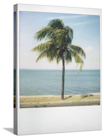 Polaroid of Single Palm Tree with Caribbean Sea in Background, Cienfuegos, Cuba, West Indies-Lee Frost-Stretched Canvas Print