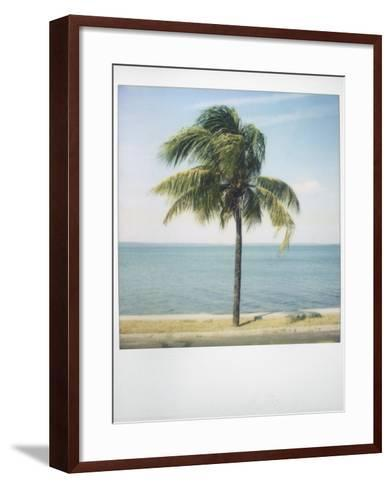 Polaroid of Single Palm Tree with Caribbean Sea in Background, Cienfuegos, Cuba, West Indies-Lee Frost-Framed Art Print