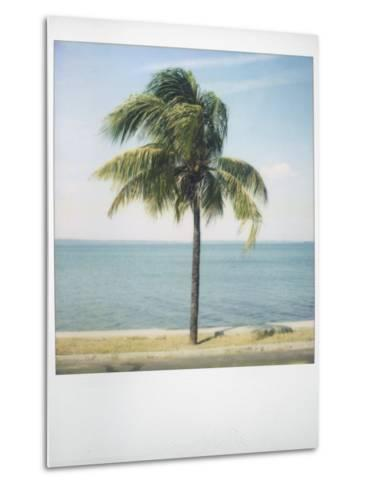 Polaroid of Single Palm Tree with Caribbean Sea in Background, Cienfuegos, Cuba, West Indies-Lee Frost-Metal Print
