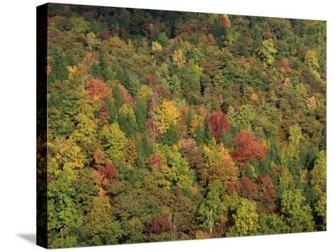 Aerial View over Autumnal Forest Canopy, Near Green Knob, Blue Ridge Parkway, North Carolina, USA-James Green-Stretched Canvas Print