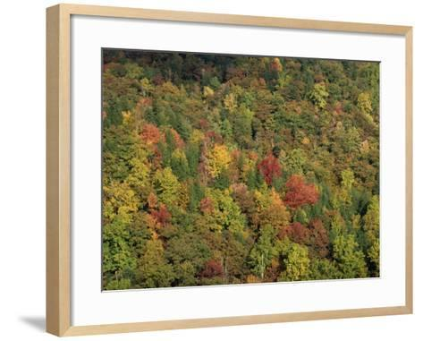 Aerial View over Autumnal Forest Canopy, Near Green Knob, Blue Ridge Parkway, North Carolina, USA-James Green-Framed Art Print