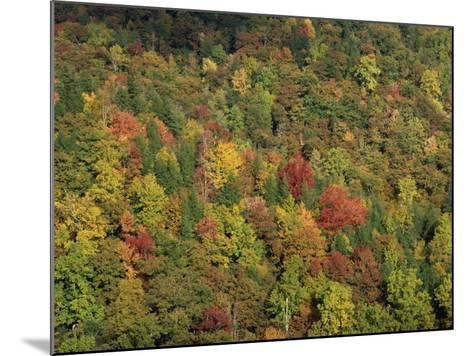 Aerial View over Autumnal Forest Canopy, Near Green Knob, Blue Ridge Parkway, North Carolina, USA-James Green-Mounted Photographic Print