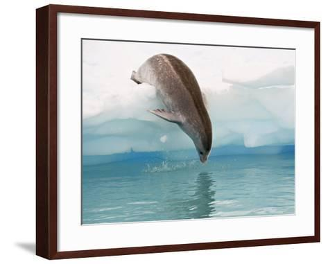 Crabeater Seal Diving into Water from an Iceberg, Pleneau Island, Antarctic Peninsula, Antarctica-James Hager-Framed Art Print