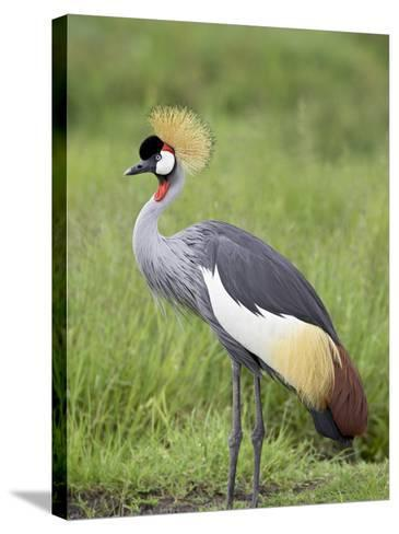 Grey Crowned Crane, Serengeti National Park, Tanzania, East Africa-James Hager-Stretched Canvas Print