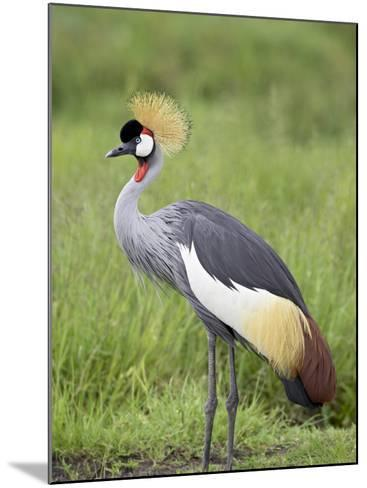Grey Crowned Crane, Serengeti National Park, Tanzania, East Africa-James Hager-Mounted Photographic Print