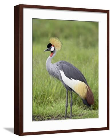 Grey Crowned Crane, Serengeti National Park, Tanzania, East Africa-James Hager-Framed Art Print