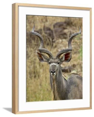 Male Greater Kudu, Kruger National Park, South Africa, Africa-James Hager-Framed Art Print