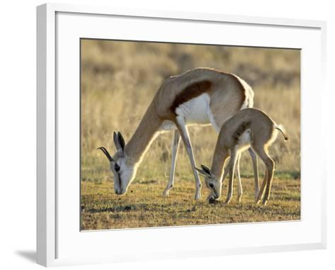 Mother and Young Springbok, Mountain Zebra National Park, South Africa-James Hager-Framed Art Print