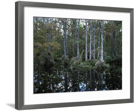 Alligators in Swamp Waters at Babcock Wilderness Ranch Near Fort Myers, Florida, USA-Fraser Hall-Framed Art Print