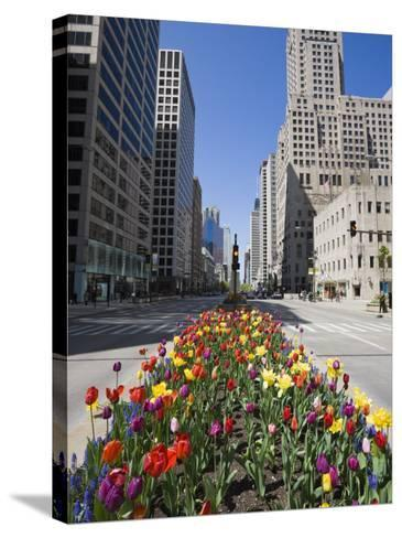 Tulips on North Michigan Avenue, the Magnificent Mile, Chicago, Illinois, USA-Amanda Hall-Stretched Canvas Print