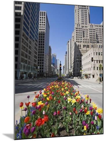 Tulips on North Michigan Avenue, the Magnificent Mile, Chicago, Illinois, USA-Amanda Hall-Mounted Photographic Print