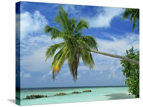 Palm Tree on the Tropical Island of Nakatchafushi in the Maldive Islands, Indian Ocean-Harding Robert-Stretched Canvas Print