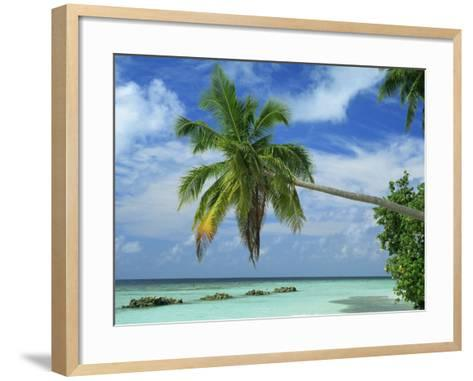 Palm Tree on the Tropical Island of Nakatchafushi in the Maldive Islands, Indian Ocean-Harding Robert-Framed Art Print