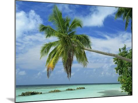 Palm Tree on the Tropical Island of Nakatchafushi in the Maldive Islands, Indian Ocean-Harding Robert-Mounted Photographic Print