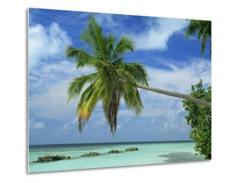 Palm Tree on the Tropical Island of Nakatchafushi in the Maldive Islands, Indian Ocean-Harding Robert-Metal Print