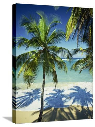 Palm Trees on Tropical Beach, Dominican Republic, West Indies, Caribbean, Central America-Harding Robert-Stretched Canvas Print