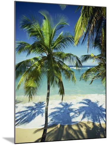 Palm Trees on Tropical Beach, Dominican Republic, West Indies, Caribbean, Central America-Harding Robert-Mounted Photographic Print