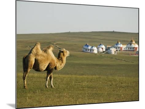 Camel with Nomad Yurt Tents in the Distance, Xilamuren Grasslands, Inner Mongolia Province, China-Kober Christian-Mounted Photographic Print