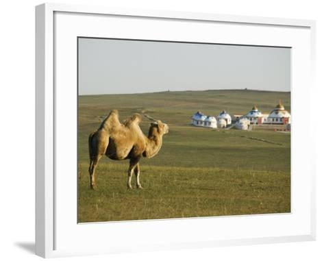 Camel with Nomad Yurt Tents in the Distance, Xilamuren Grasslands, Inner Mongolia Province, China-Kober Christian-Framed Art Print