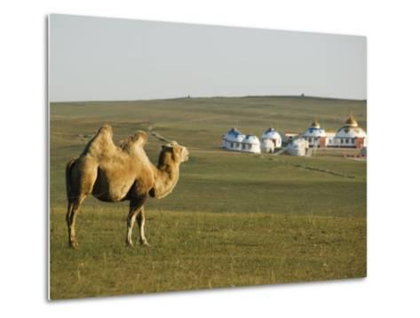 Camel with Nomad Yurt Tents in the Distance, Xilamuren Grasslands, Inner Mongolia Province, China-Kober Christian-Metal Print