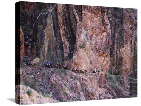 Mules Taking Tourists Along the Colorado River Trail, Grand Canyon, Arizona, USA-Kober Christian-Stretched Canvas Print