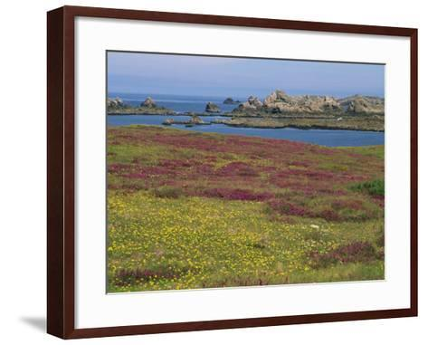 Wild Flowers on the Shore and the Rocky Coast of the Ile D'Ouessant, Finistere, Brittany, France-Miller John-Framed Art Print