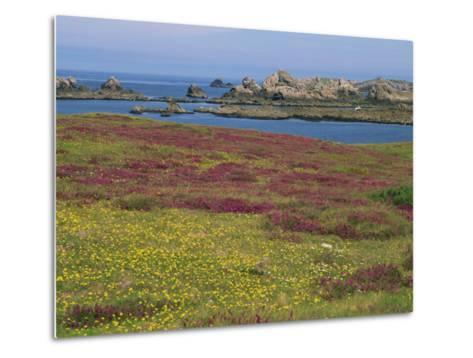 Wild Flowers on the Shore and the Rocky Coast of the Ile D'Ouessant, Finistere, Brittany, France-Miller John-Metal Print