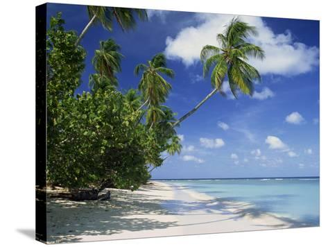 Palm Tree on a Tropical Beach on the Island of Tobago, West Indies, Caribbean, Central America-Miller John-Stretched Canvas Print