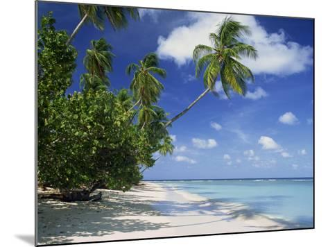 Palm Tree on a Tropical Beach on the Island of Tobago, West Indies, Caribbean, Central America-Miller John-Mounted Photographic Print