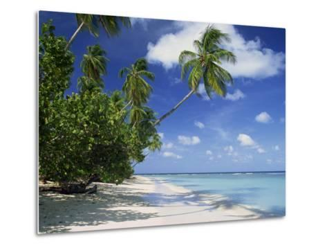 Palm Tree on a Tropical Beach on the Island of Tobago, West Indies, Caribbean, Central America-Miller John-Metal Print