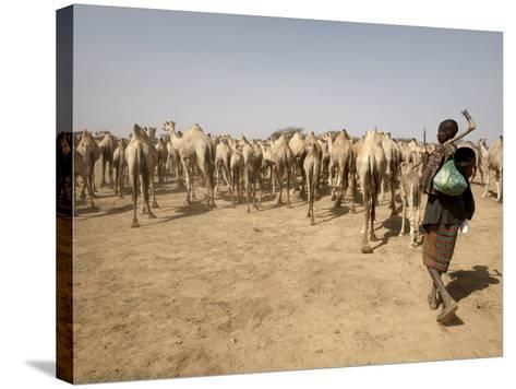 Nomadic Camel Herders Lead their Herd to a Watering Hole in Rural Somaliland, Northern Somalia-Mcconnell Andrew-Stretched Canvas Print