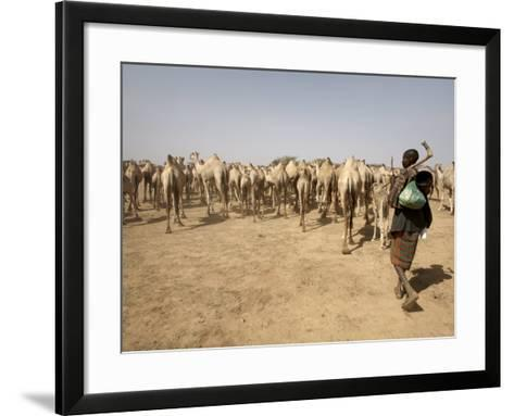 Nomadic Camel Herders Lead their Herd to a Watering Hole in Rural Somaliland, Northern Somalia-Mcconnell Andrew-Framed Art Print
