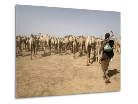 Nomadic Camel Herders Lead their Herd to a Watering Hole in Rural Somaliland, Northern Somalia-Mcconnell Andrew-Metal Print