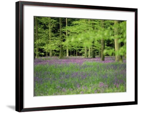 Wild Flowers in Spring, 100 Acres, Forest of Bere, Hampshire, England, United Kingdom, Europe-Legate Jane-Framed Art Print