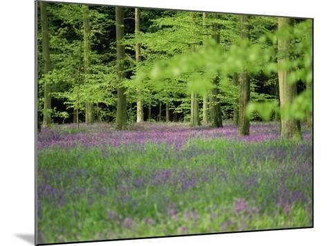 Wild Flowers in Spring, 100 Acres, Forest of Bere, Hampshire, England, United Kingdom, Europe-Legate Jane-Mounted Photographic Print
