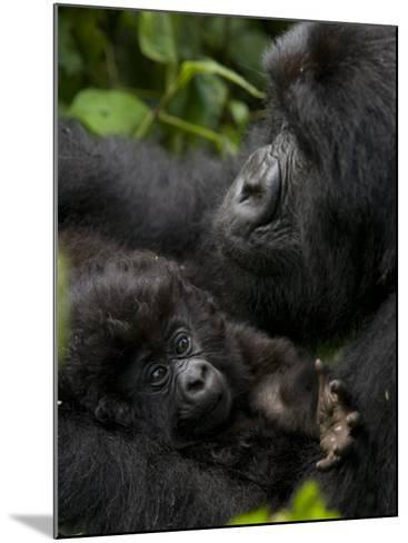 Mountain Gorilla with Her Young Baby, Rwanda, Africa-Milse Thorsten-Mounted Photographic Print