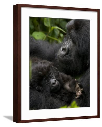 Mountain Gorilla with Her Young Baby, Rwanda, Africa-Milse Thorsten-Framed Art Print