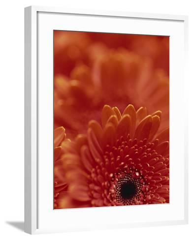 Detail of a Red Gerbera, Stacked-Murray Louise-Framed Art Print