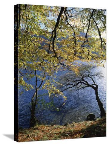 Autumn Trees at Ullswater, Lake District National Park, Cumbria, England, United Kingdom, Europe-Rainford Roy-Stretched Canvas Print