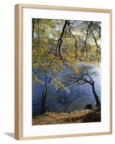Autumn Trees at Ullswater, Lake District National Park, Cumbria, England, United Kingdom, Europe-Rainford Roy-Framed Art Print